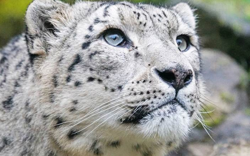 Panera Bread, Fur Ban, Wild Life Protection and Coronavirus